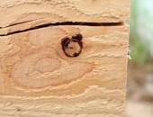 Kiln Dried timber with pitch set around knot.